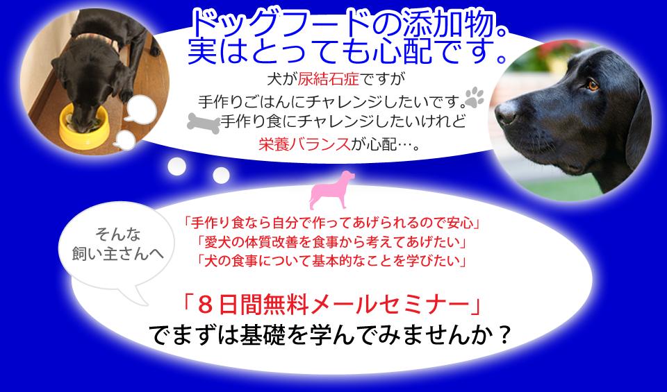 犬の手作り食の素朴な疑問を解消 | Office Guriメールセミナー「美味しい犬めし通信」